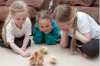 Children are fascinated by the chicks